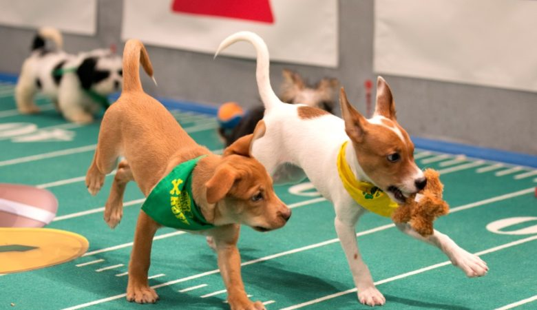 It's Cuteness Overload When PUPPY BOWL XIII Tears Up the Turf, February 5 on Animal Planet