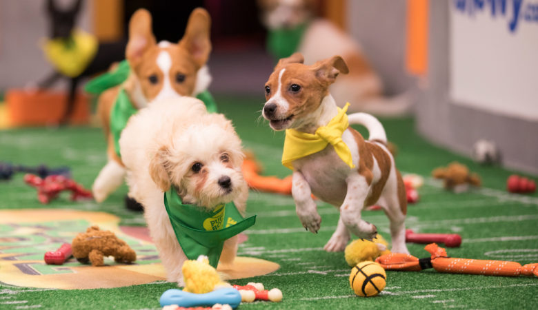Tuff, Ruff, and Really Cute! PUPPY BOWL XIV Returns Feb. 4 on Animal Planet