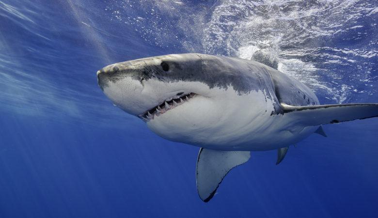 SHARK WEEK 2018 Highlights - Sunday, July 22 through Sunday, July 29 on Discovery