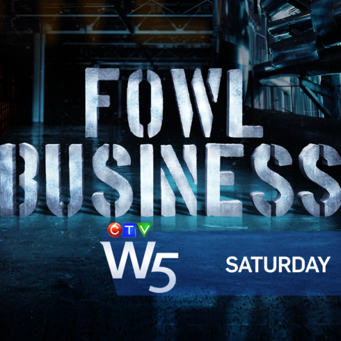 PROMO - W5 FOWL BUSINESS - SAT7