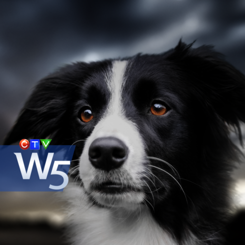 promo-w5-dr-dog-sat7