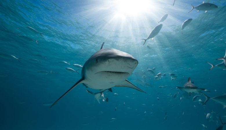 Bigger Sharks and Bigger Bites! 31st Annual SHARK WEEK Makes Massive Splash, Beginning July 28